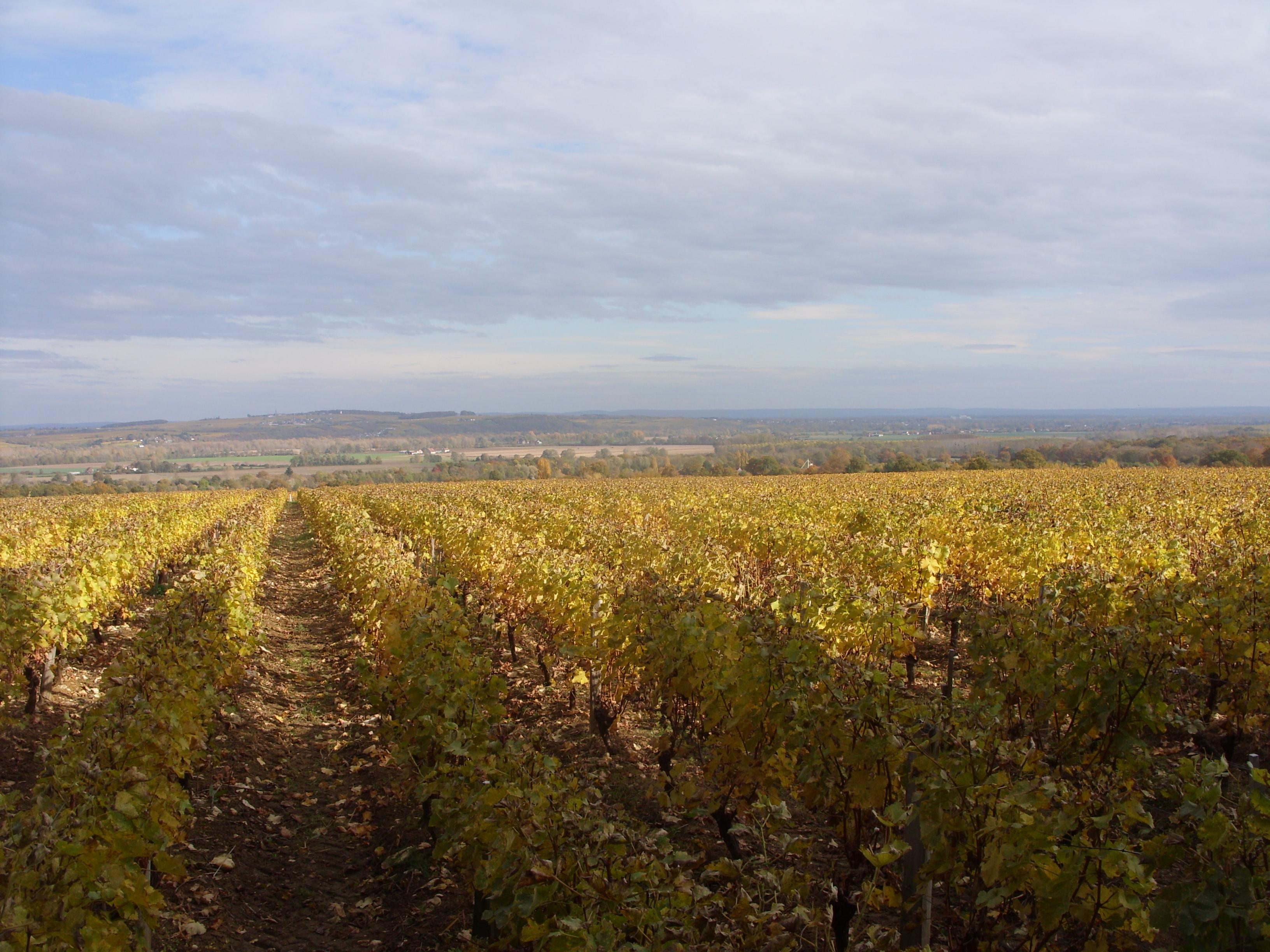 vue-du-panorama-des-hauteurs-des-vignes-de-thauvenay