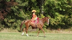 dressage-equestre