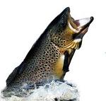 image-de-poisson