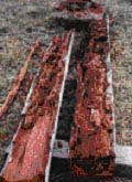 termite-2