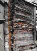 termite-3