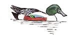 canard-souchet