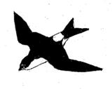 hirondelle-de-fenetre