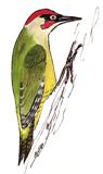 pic-vert
