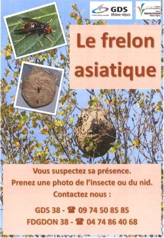 bellegarde-poussieu-frelon-asiatique