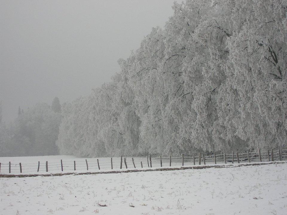 lhiver-a-succieu-un-manteau-de-gel