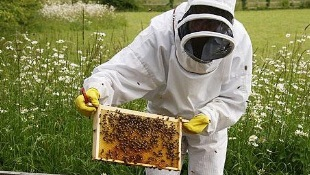 photo-apiculture