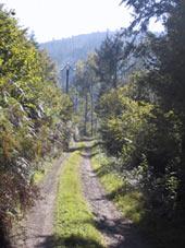 le-long-du-ruisseau-de-biconne
