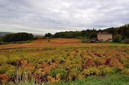 viticulteurs-ternandais