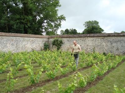 vigne-2010