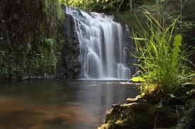 cascade-bois-de-c